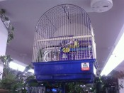PENN PLAX Bird Cages - Save $13 off Penn PLAX Bird Cages in Assorted Colours!!