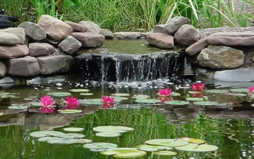 Koi Fish Pond Aqua Animania