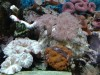 Marine Fish and Corals