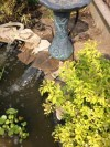 Pond Kits from AquA AnimaniA are as EASY as 1,2,3...