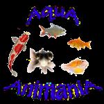Outdoor Garden Pond Fish - Various Species