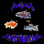Tropical Freshwater Fish - Various Species