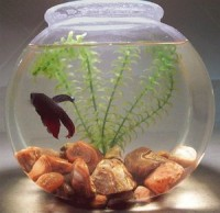 Fish Bowls - Assorted selection of classic, decorative, acrylic and glass