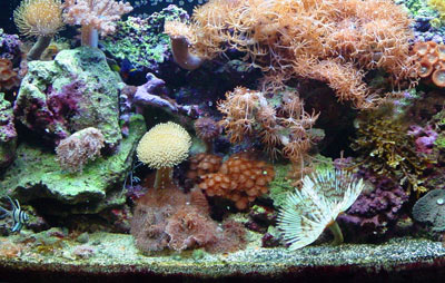 Live Coral Reef Aquarium