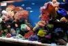 265 Gallon Aquariums We Lead Windsor/Essex in Service and Price!