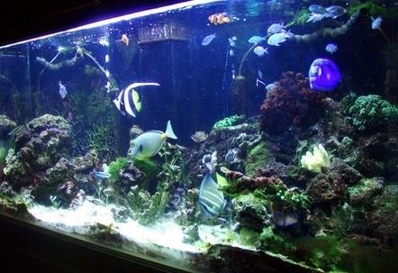 265 gallon aquariums aqua animania for Aquarium pond fish pdf