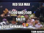 RED SEA MAX Plug n Play Coral Reef Fish Aquarium!
