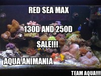 RED SEA MAX Plug n Play Coral Reef Fish Aquarium!