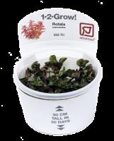 Tropica 1-2-Grow!